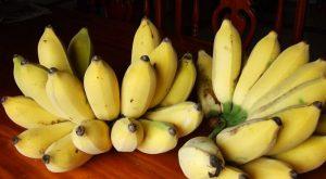 ประโยชน์ของกล้วยน้ำว้าที่ดีต่อไก่