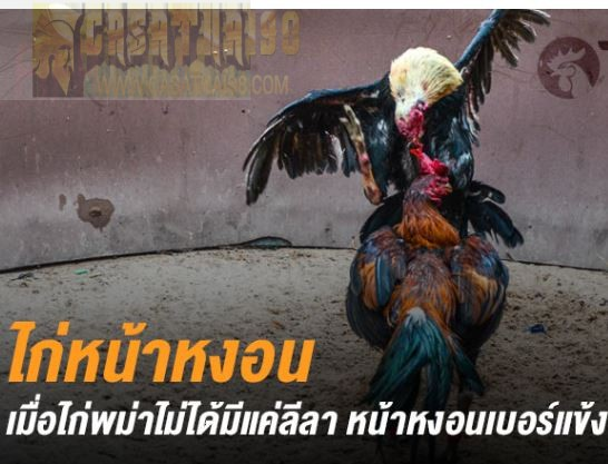 ไก่ชน ไก่ชนหน้าหงอน หรือ ไก่ชนพม่าหน้าหงอน