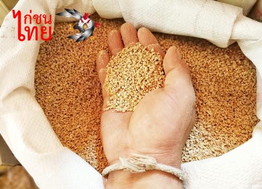 การเลี้ยงไก่ชน รวมอาหารหลัก อาหารเสริม สำหรับไก่เลี้ยงออกชน